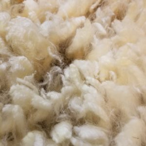 Raw and Washed Wool